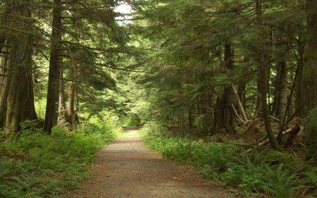 Best of Twin Peaks Fest